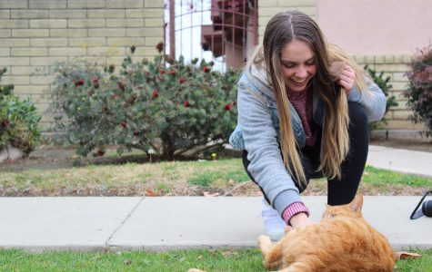 One Tribe: Find a stray? Call Aubree