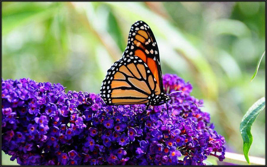 Butterfly Garden Grand Opening