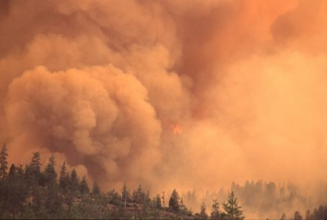 The Effect of the California Wildfires