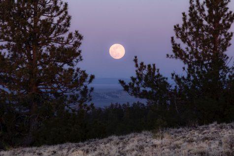 A Pink Moon?