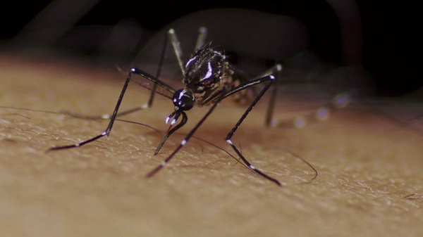 Mosquitoes Making a Move